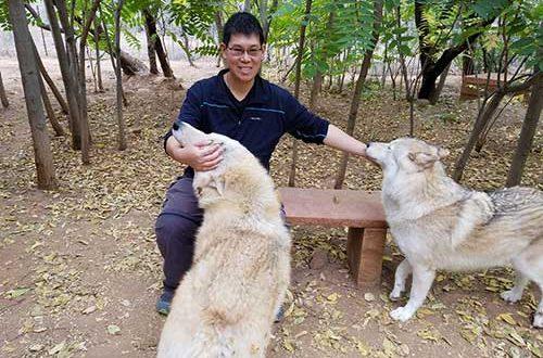 nat-wolves