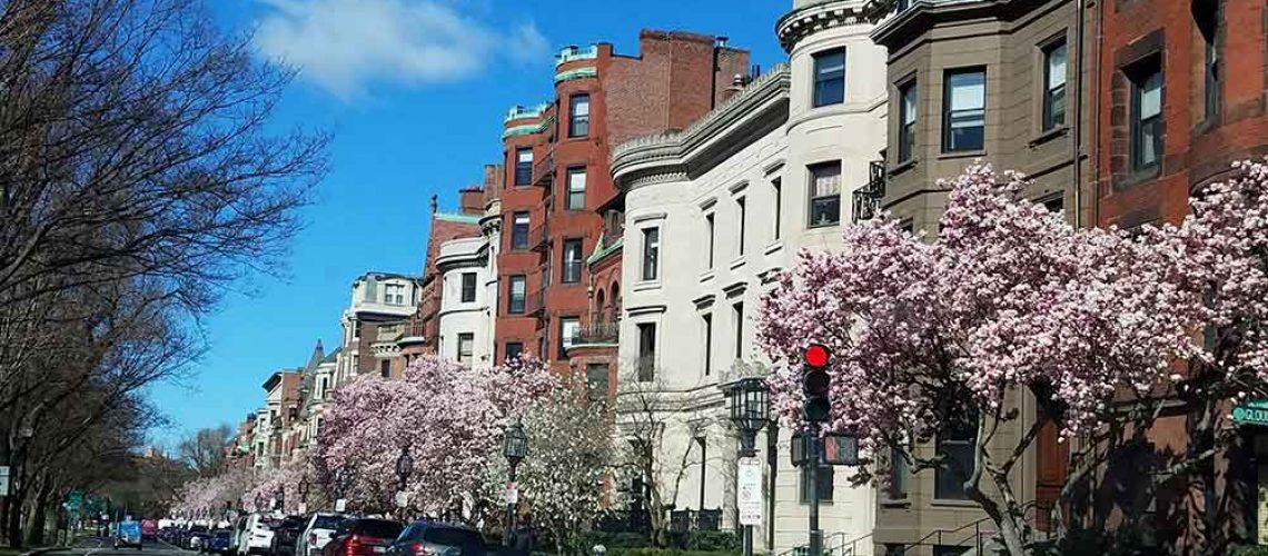 Boston Spring Flowers